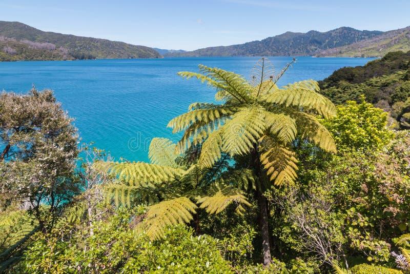 Königin Charlotte Sound in Marlborough-Ton, Südinsel, Neuseeland stockfotos