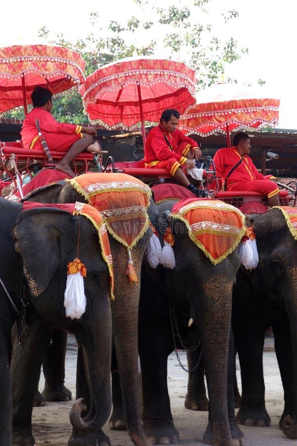 Königliche Elefant-Fahrten in Thailand stockfotografie