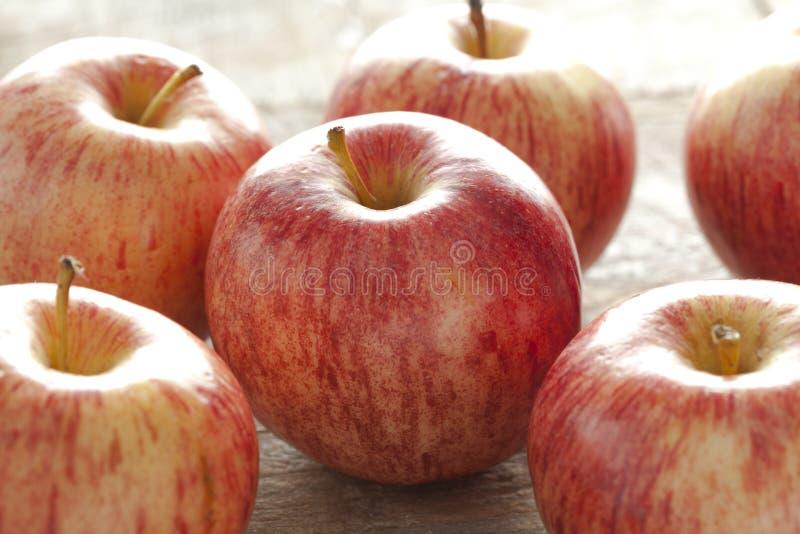 Königliche Gala-Äpfel lizenzfreie stockfotos