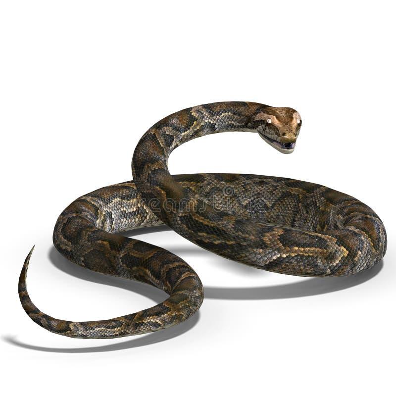 Königliche Pythonschlange stock abbildung