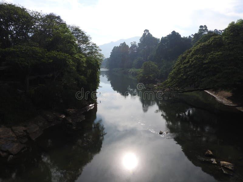Königlicher botanischer Garten in Kandy, Sri Lanka, grüne Flora an einem klaren sonnigen Tag lizenzfreie stockfotos