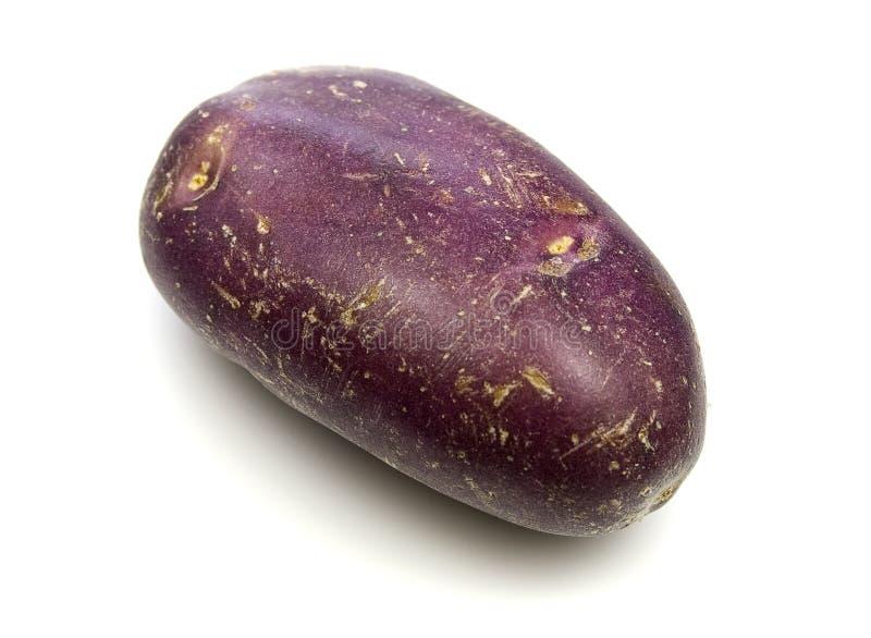 Königliches Blau-Kartoffeln stockfoto