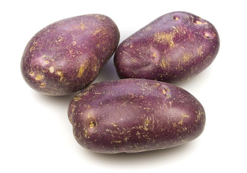 Königliches Blau-Kartoffeln stockfotos