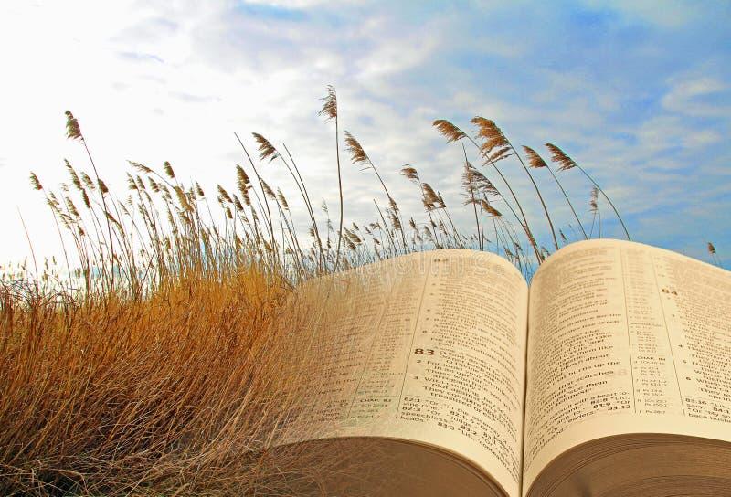 Königreich der Bibelparabeljesuss Christus der Himmel offenen Gottjehovah-Religion stockbild