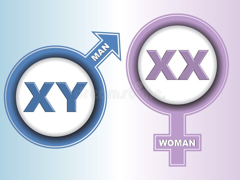 Könsbestämma kromosomtecken stock illustrationer