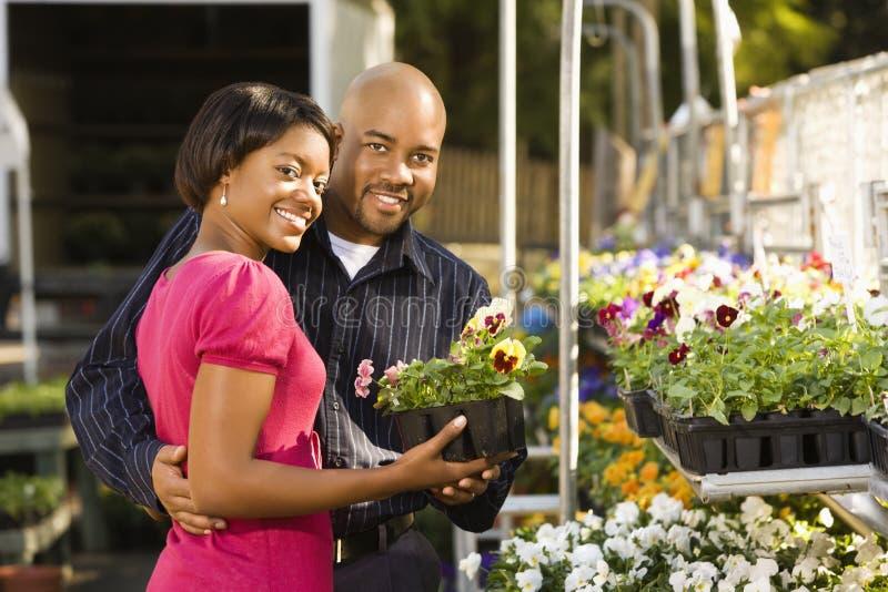 köpande parväxter arkivfoton