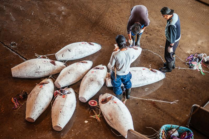 Köpmän i japansk marknad för ny fisk under tonfiskfiskauktion royaltyfria foton