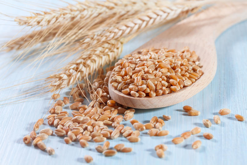 Körner des Weizens stockbilder