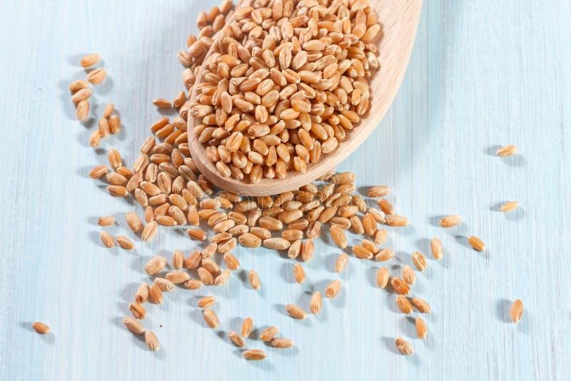 Körner des Weizens lizenzfreie stockfotos