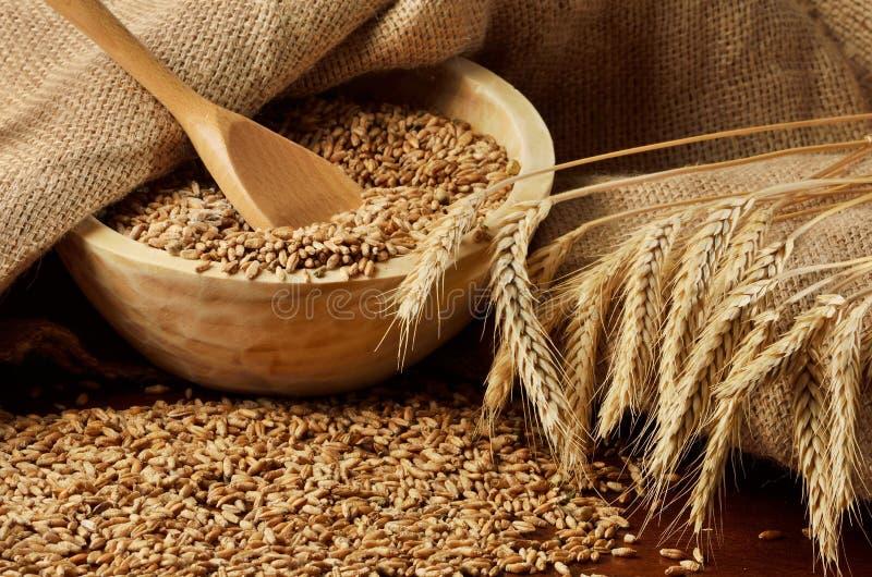Körner und Ohren des Weizens stockbild