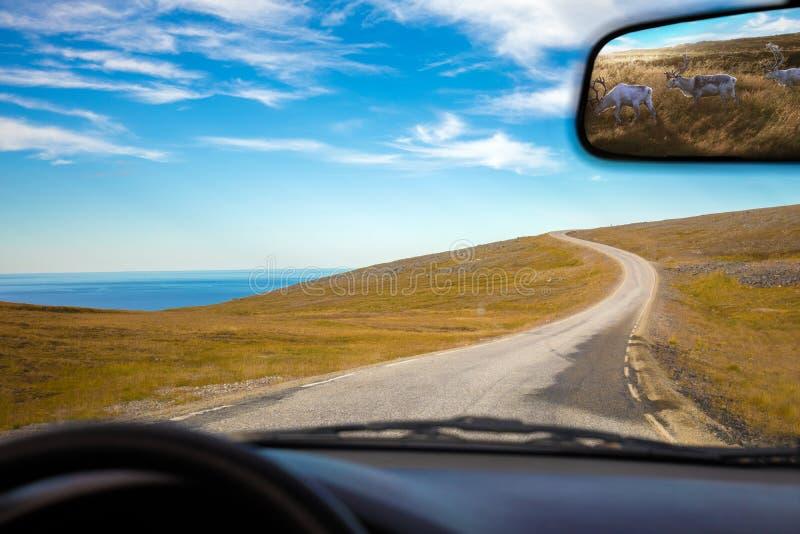 Körning av en bil på vägen royaltyfria bilder