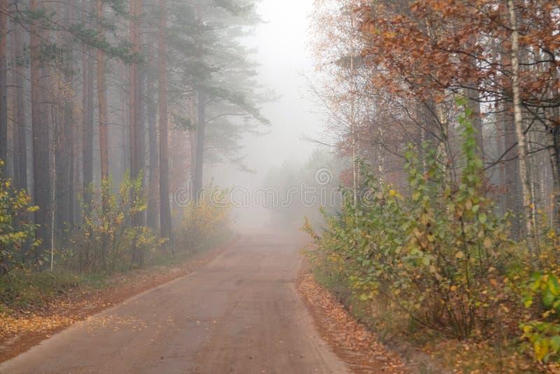 Körning på bygdvägen i dimma Illustration av faror av D royaltyfri bild