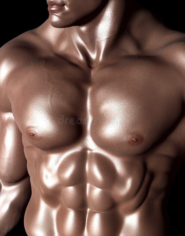Körper-Mann, Muskel, Unterleib, Bodybuilder stockbilder