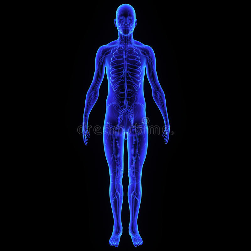 Körper mit Nervensystem stockbild