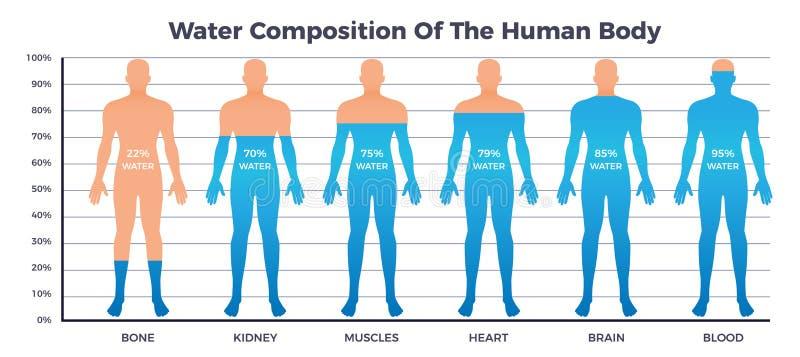 Körper-und Wasser-Diagramm lizenzfreie abbildung
