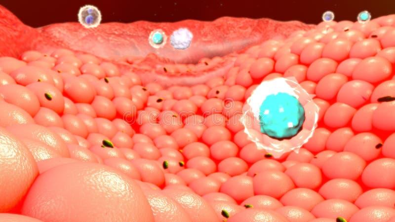 Körperzellen stockfotografie