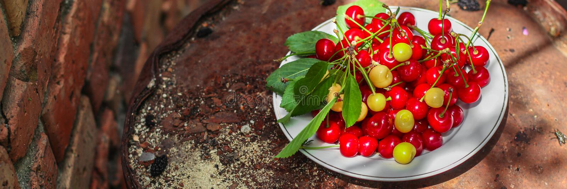 Körsbär, fruktbär, mogna och saftiga frukter för skörd Bästa kopieringsutrymme många bakgrundsklimpmat meat mycket fotografering för bildbyråer