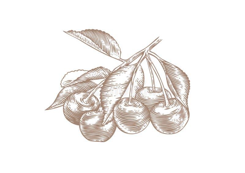 Körsbär på filialen vektor illustrationer