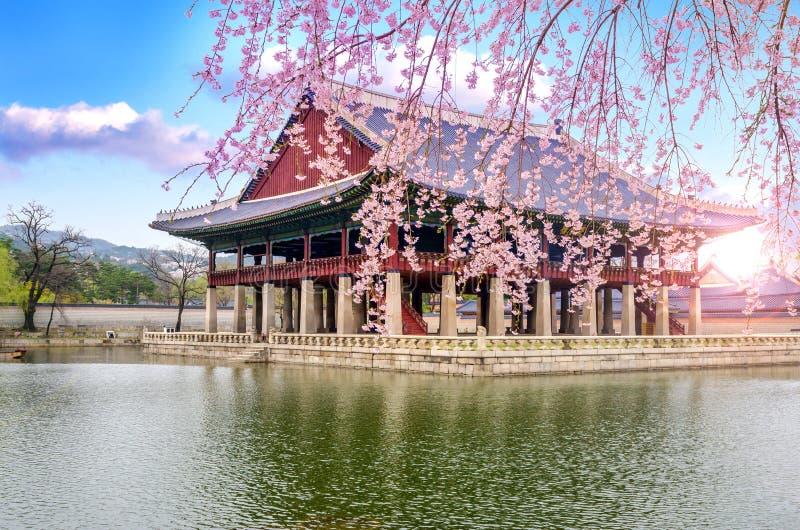Körsbärsröd blomning i vår av den Gyeongbokgung slotten i seoul, Korea arkivfoto