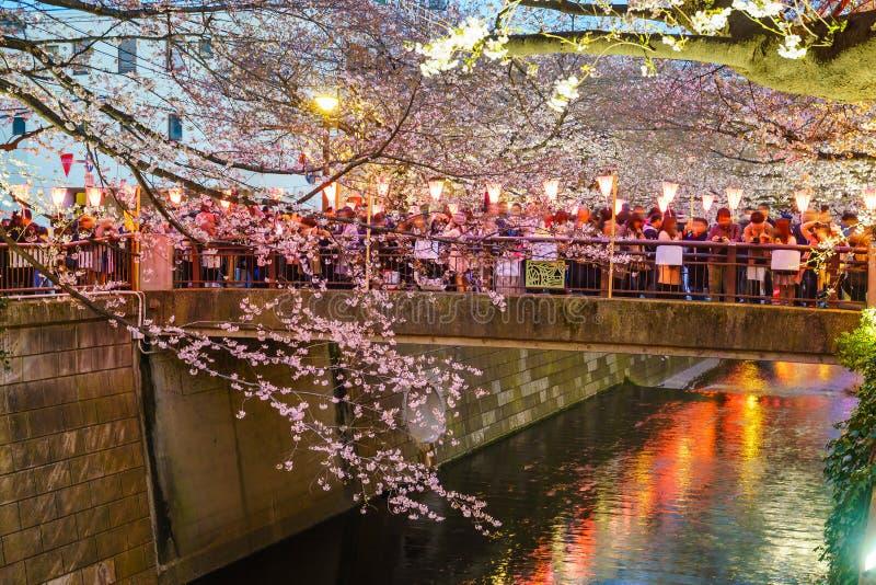 Körsbärsröd blomning på den Meguro kanalen på skymning i Tokyo arkivbilder