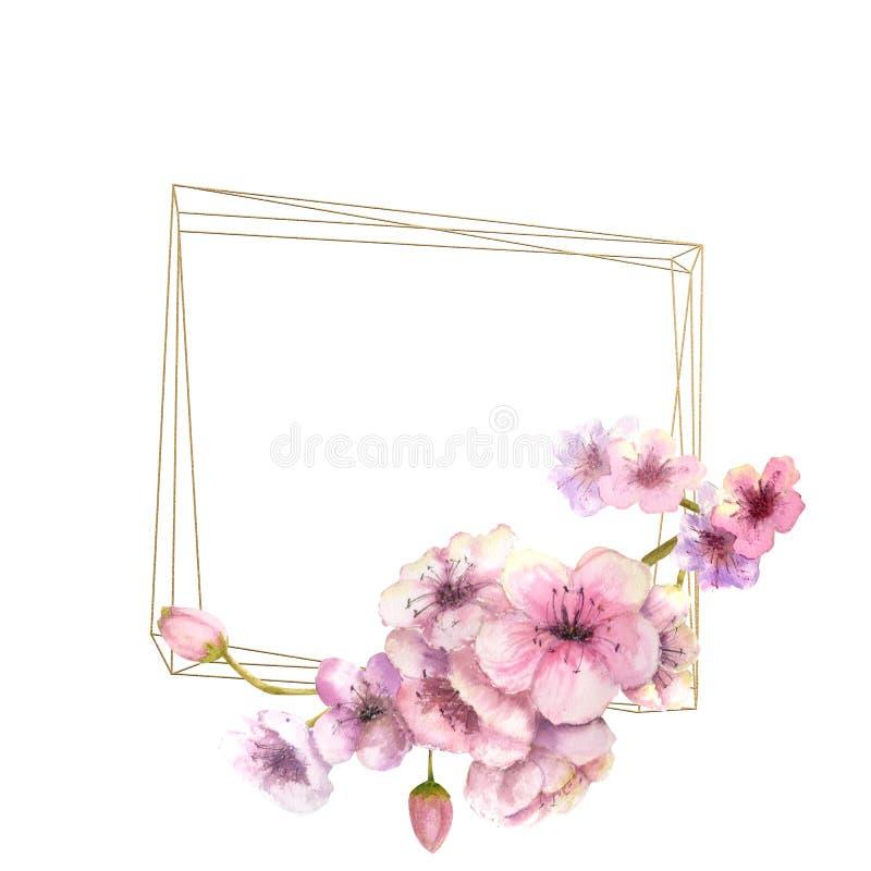 Körsbärsröd blomning, Sakura Branch med rosa blommor på guld- ram och isolerad vit bakgrund Bild av våren Ram vattenfärg vektor illustrationer