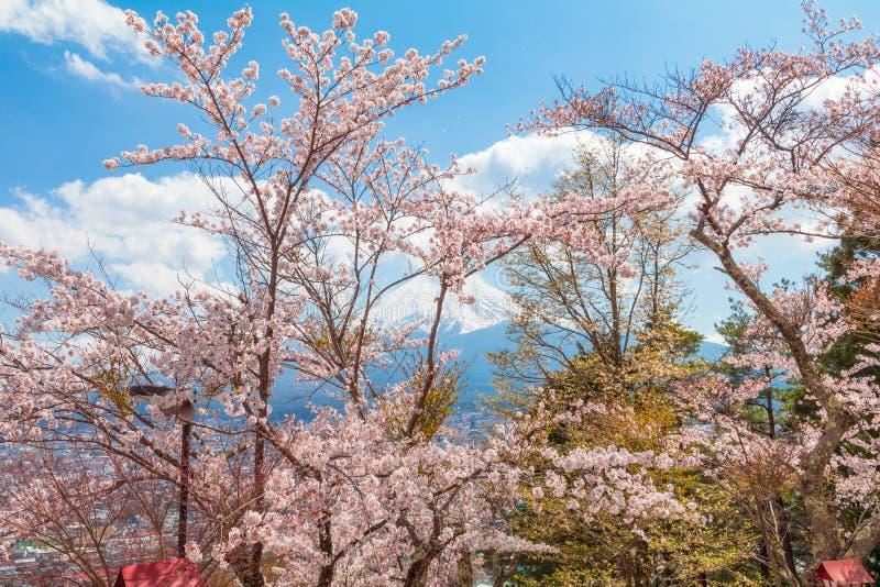 Körsbärsröd blomning sakura i vårsäsong och Mt fuji arkivbild