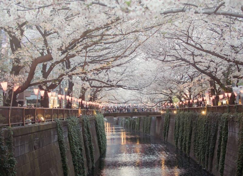 Körsbärsröd blomning Sakura på nakamegurofloden i Tokyo, Japan arkivbild