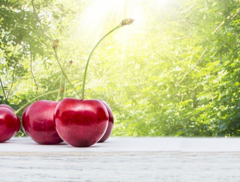 Körsbärsröd frukt på bakgrund av den soliga trädgården för sommar royaltyfria foton