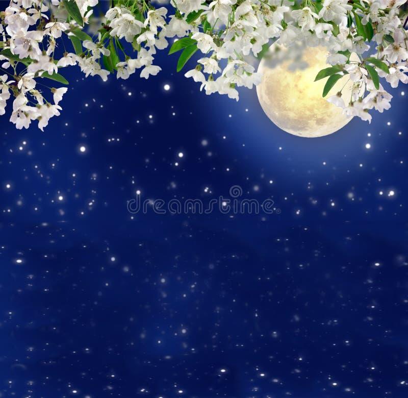Körsbärsröda blomningar i månskenet Vårnatt mystic Full mu royaltyfri illustrationer