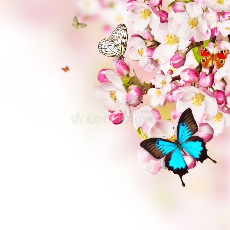 Körsbärsröda blomningar med fjärilar över suddig naturbakgrund arkivbilder
