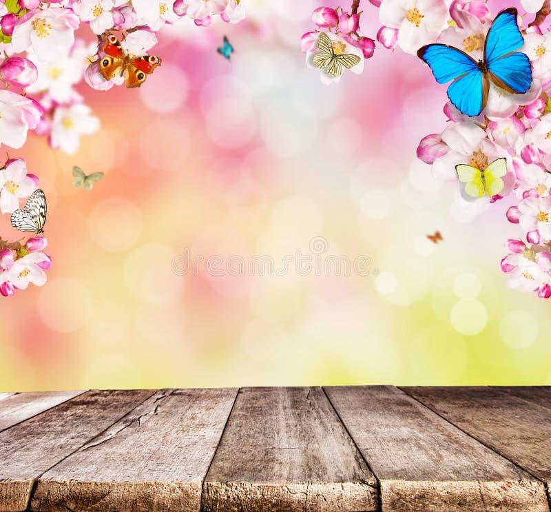 Körsbärsröda blomningar med fjärilar och träplankor royaltyfria bilder