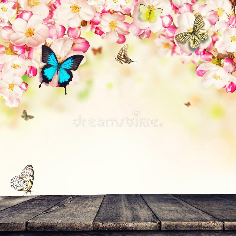 Körsbärsröda blomningar med fjärilar och träplankor arkivfoton