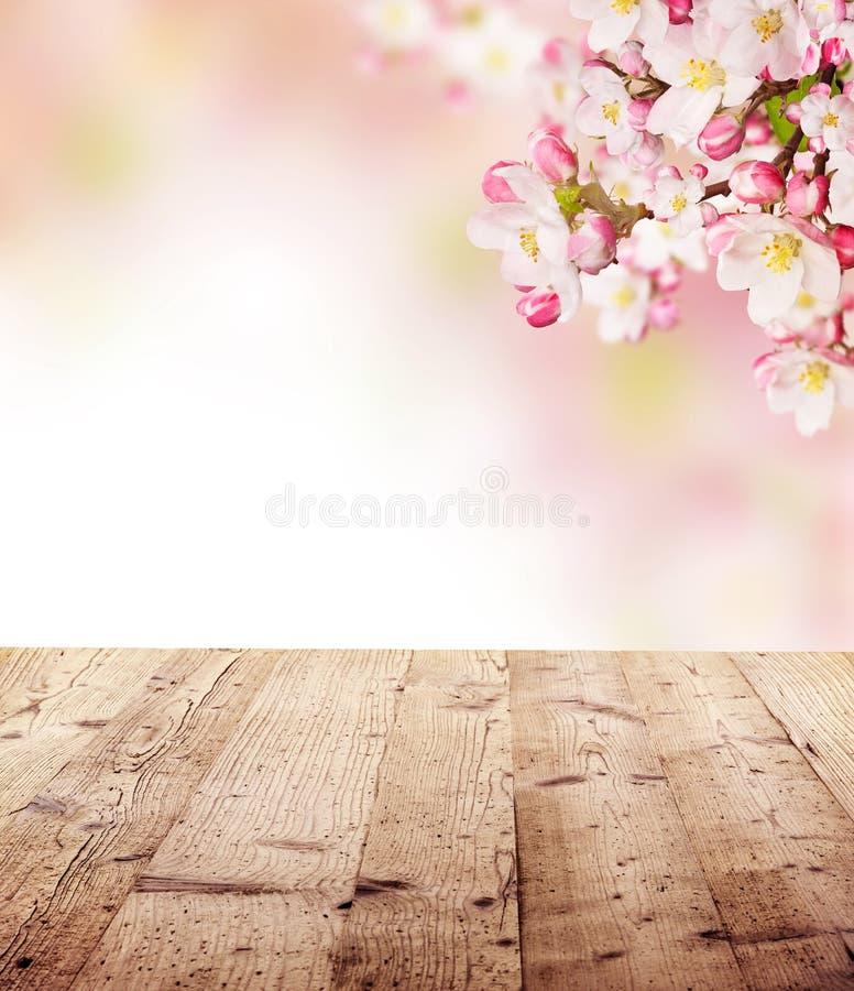 Körsbärsröda blomningar med tomma träplankor fotografering för bildbyråer