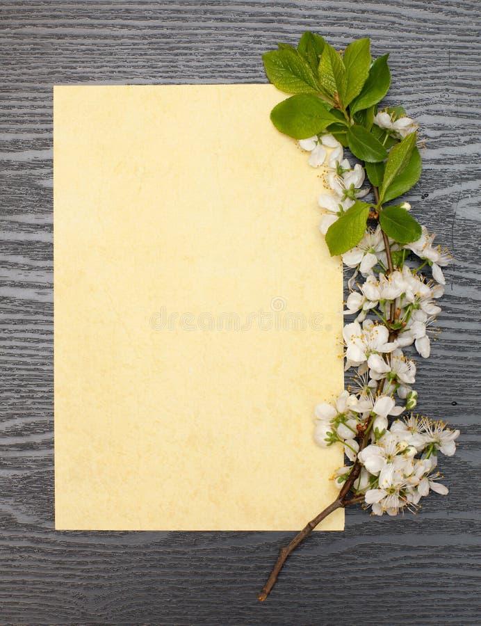 Körsbärsröda blomningar och papper royaltyfri bild