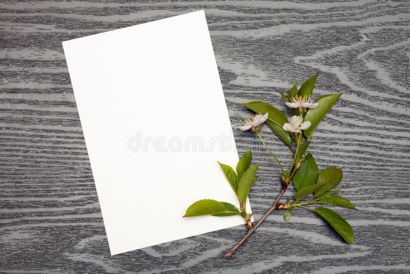 Körsbärsröda blomningar och papper royaltyfri foto