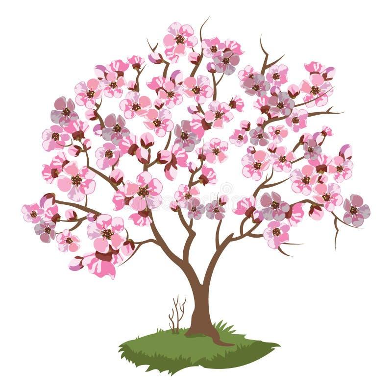 Körsbärsröda blomningar Vårillustration av en blomma sakura vektor illustrationer