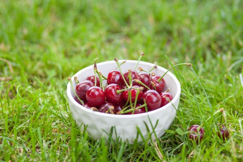 Körsbärsrött moget stort i en platta på gräset royaltyfri fotografi