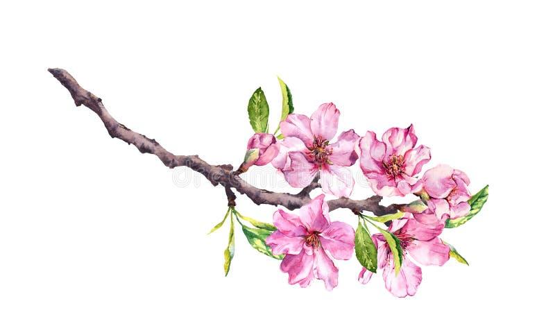 Körsbärsrött träd för blomning Det rosa äpplet blommar, sakura, mandelblommor på blommande filial vattenfärg arkivfoton
