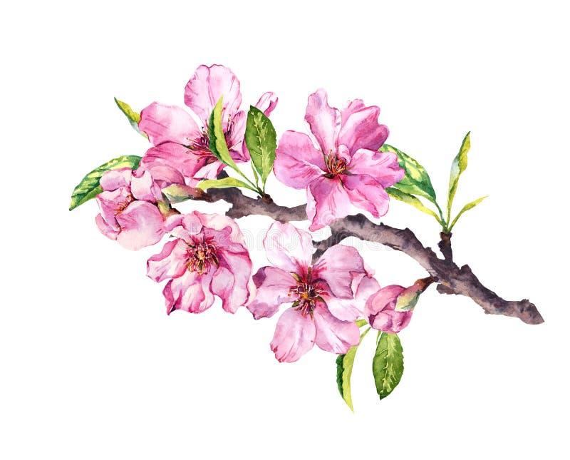 Körsbärsrött träd för blomning Det rosa äpplet blommar, sakura, mandelblommor på blommande filial vattenfärg royaltyfri illustrationer