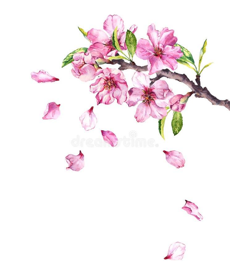 Körsbärsrött träd för blomning Det rosa äpplet blommar, sakura, mandelblommor på blommande filial vattenfärg stock illustrationer