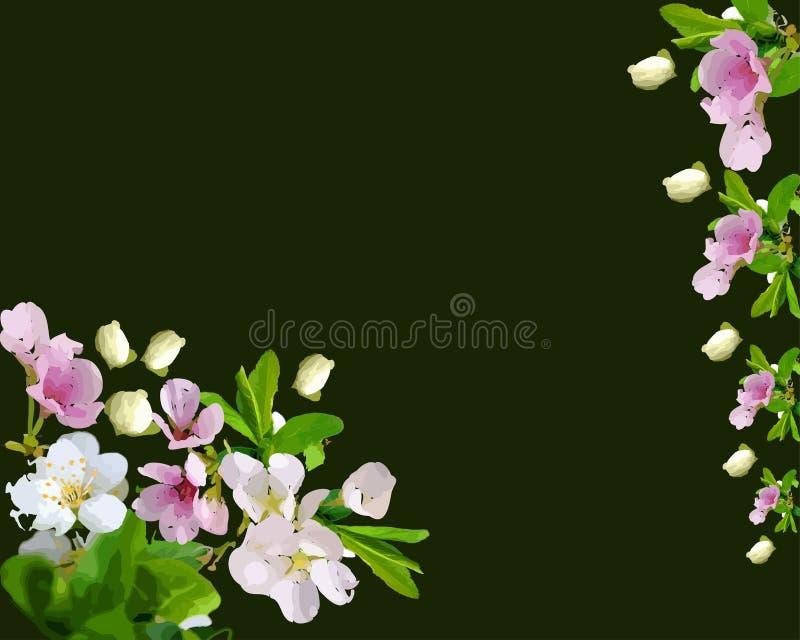 Körsbärsrött träd, härlig blomning vektor illustrationer