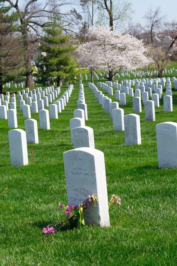 Körsbärsrött träd på den Arlington kyrkogården royaltyfri foto