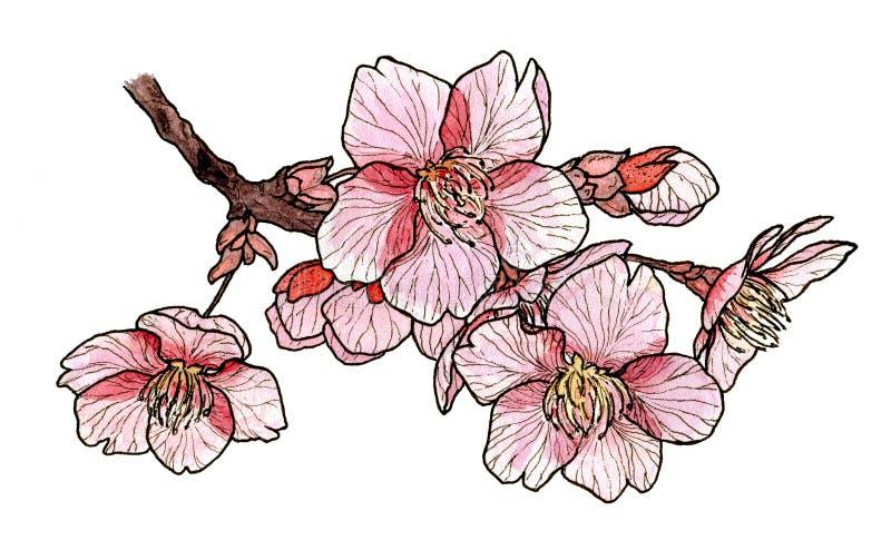 Körsbärsrött träd sakura för blomning royaltyfri illustrationer