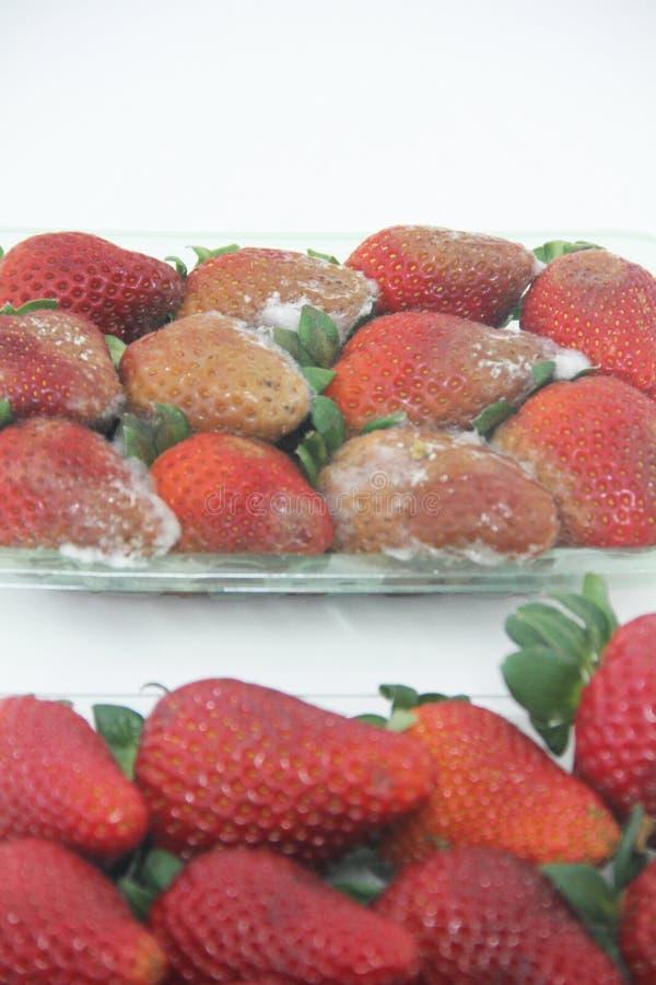 Köstliches gesundes Sao Paulo Brazil Frucht der Erdbeernahrungsmittellandwirtschaft lokalisiertes Form lizenzfreies stockbild