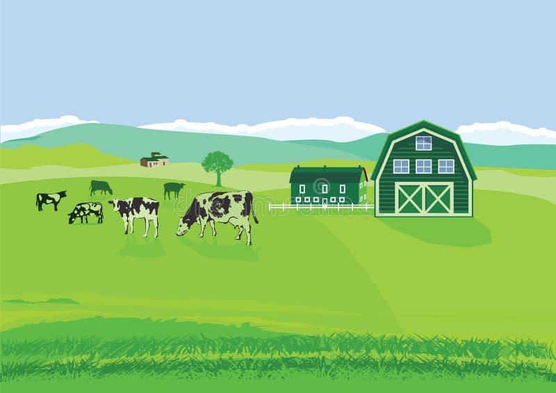 Kühe in der Weide am Bauernhof stock abbildung