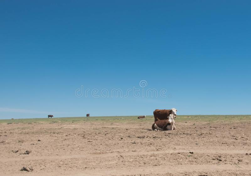 Kühe an einem Tag in der Steppe gegen den blauen Himmel lizenzfreie stockfotografie