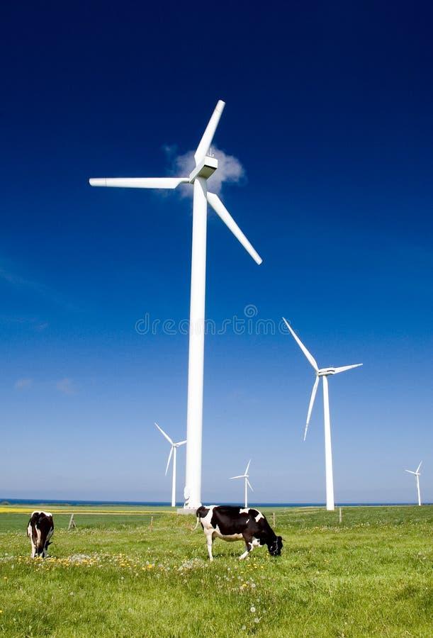 Kühe und Windturbinen. lizenzfreies stockfoto