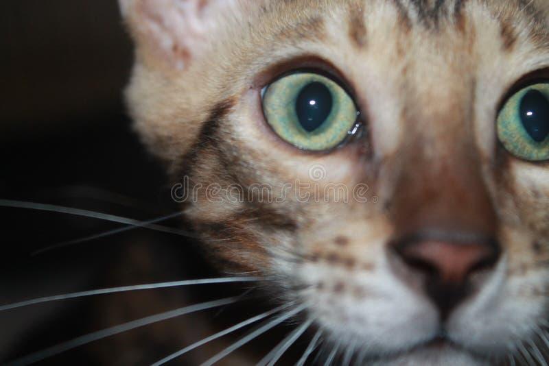 Kühle Katze lizenzfreie stockbilder