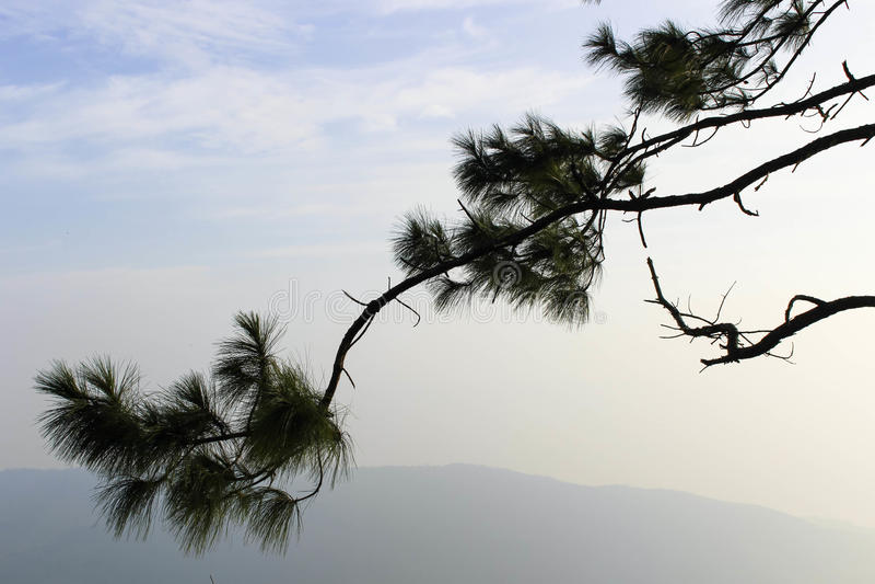 Kühler Himmel vor Sonnenaufgang bei Phurua lizenzfreie stockfotografie