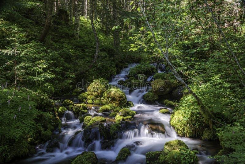 Kühler nationaler Forest Stream Ambles Down The-Bergabhang stockfoto